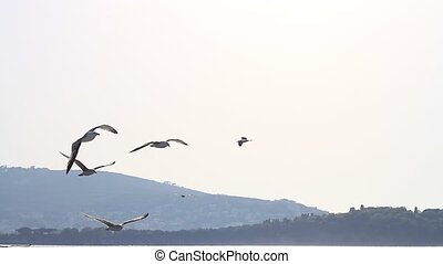Seabirds - Seagulls flock the ship Heybeli Ada -Islands-...