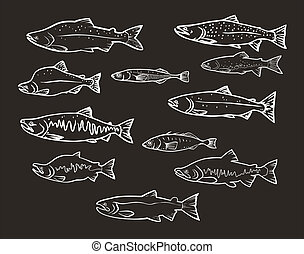 Peixes, vetorial, salmão,  set: