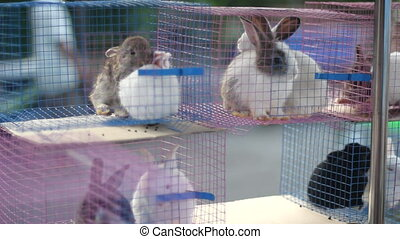 hare, cage.