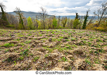 Plowed Fields - The Italian Forests and Plowed Fields,...