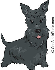 Scottish Terrier - Illustration Featuring a Scottish Terrier