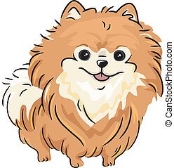 Pomeranian - Illustration Featuring a Pomeranian