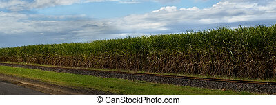 panaoramic sugar cane plantation in australia with rail track and blue sky