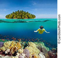 Coraux, plongeur, paume, île