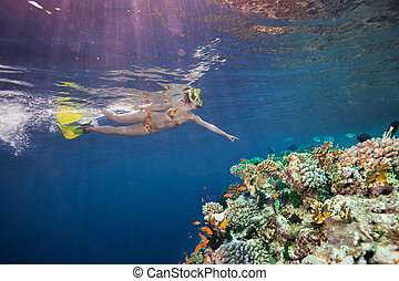 Woman scuba diver pointing to corals - Woman scuba diver...