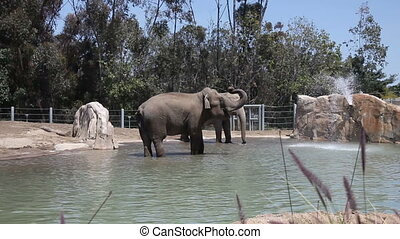 Elephants in water in the zoo