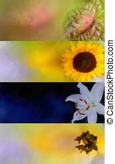 Oil painted flower banner set for multipurpose use in web...