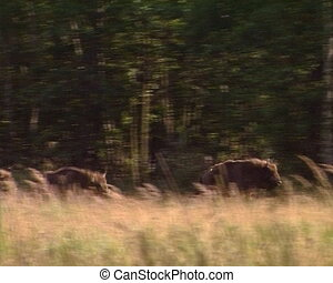 wisent Red Book protect