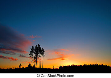conifer trees on colorful sky at sunset - silhouette of...