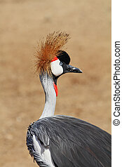 Park safari in Tel Aviv - Elegant and graceful bird with...