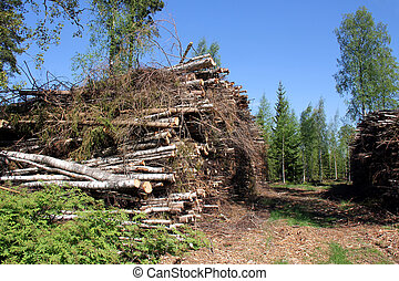 Wood Fuel for Power and Energy in Summer Forest