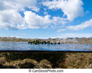 Over-under split shot of clear water in tidal pool - Half...