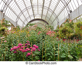 Flowers growing in glass hothouse of garden center -...