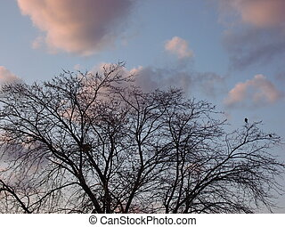 Two Blackbirds on Tree at Dusk - Two random crows sit atop...