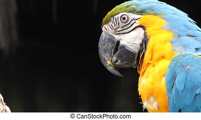 parrot, rainforest