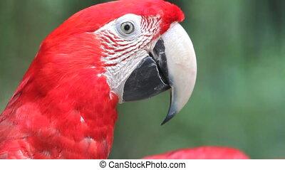 parrot, rainforest