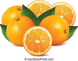 Oranges - Orange studio isolated on white background