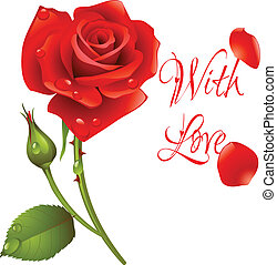 Vector red rose - image can be re-size to any limit