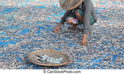 Woman turning dry fish - Gyeiktaw village, Ngapali beach,...