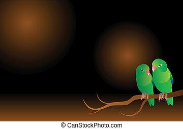 parrots background