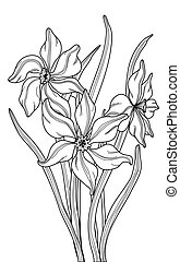 Narcissus - Vector hand drawn fantasy Narcissus and leaves