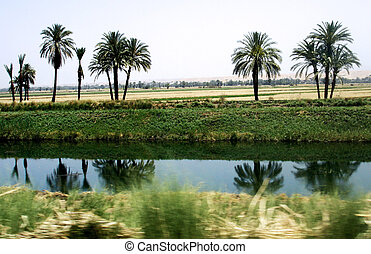 Water Channel in Egypt - Palm trees on a water channel from...