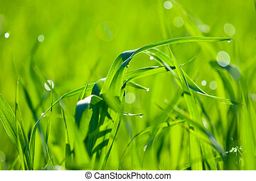 Natural green background with grass. Soft focus
