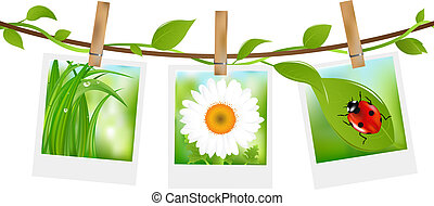 Summer Photos With Clothespins, Isolated On White...
