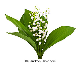 lilies of the valley isolated on white - beautiful lilies of...