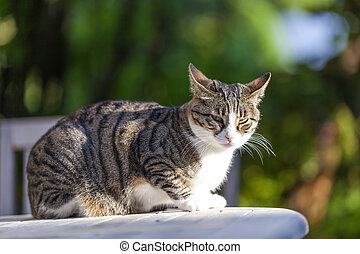 cute cat relaxing on a wooden table in the garden