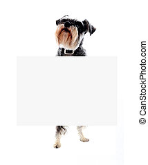 Schnauzer dog holding blank banner ad - Its time for doggy...