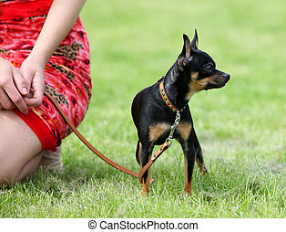 Dog with its owner is sitting on the grass