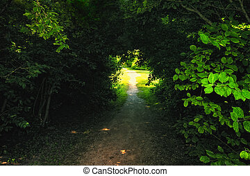 Shadowy Path - Shadowy beaten path between trees in the park...