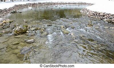 water birds in the fresh source