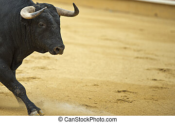 Bull in the bullring. - Bull in the bullring with a copy...