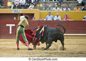 Bullfighter and bull. - A matador fighting in a typical...