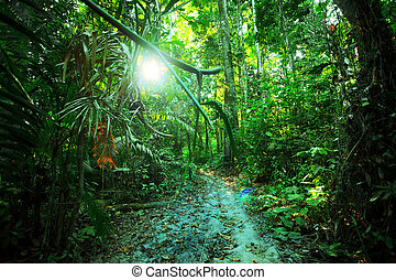 environment - Tropical forest, palm trees and trank.