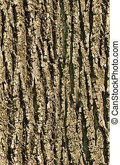 Tree bark seamless texture background - Tree Ash bark...