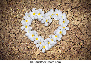 Plumeria flowers heart on Dry cracked earth background