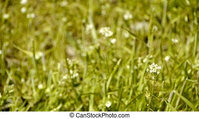 Beautiful wild flowers in grass.