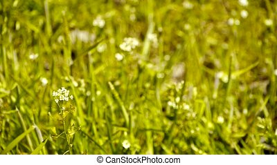 Beautiful wild flowers in grass