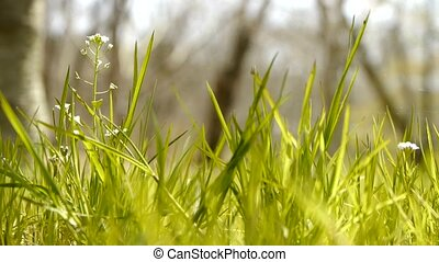 Beautiful wild flowers in grass - Beautiful wild flowers in...
