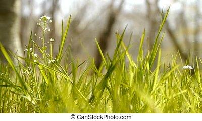 Beautiful wild flowers in grass. - Beautiful wild flowers in...