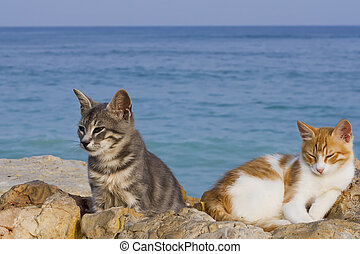 Cats rest by the sea - two cats relax by the sea