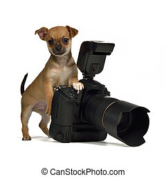 Chiuahua puppy with photo camera, isolated on white...