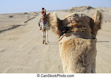 sit on the camel