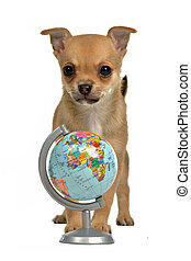 Puppy with globe, isolated on white background
