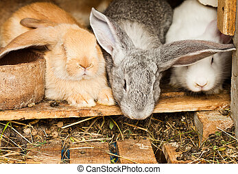 Rabbits hutch - Three different rabbits closeup in hutch