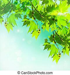 avião, árvore, folhas, abstratos, fundo