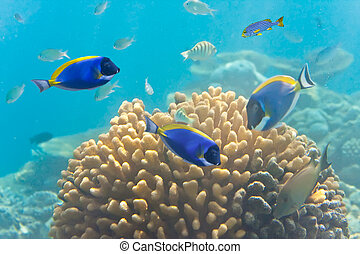 Underwater world Fishes in corals